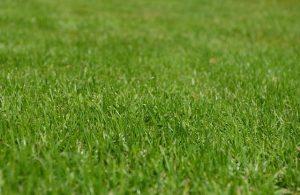 græshøjde