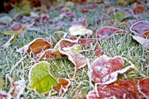 græsplane vinter